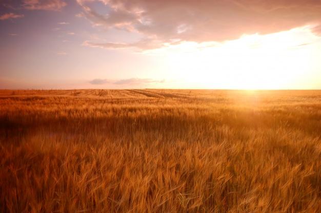 Zachowek, a umowa o przekazanie gospodarstwa rolnego, nieruchomości i gruntu